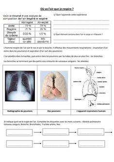 La digestion CM1-CM2   digestion   Cm1 cm2, Sciences cm1 y Sciences ce2