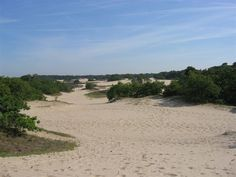Lekker fietsen en wandelen in Nederland ~ Fietsenwandelweb.nl Holland, Beach, Outdoor, Scenery, The Nederlands, Outdoors, The Beach, Netherlands, Beaches