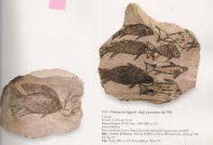 Ostracon figuré - un tilapia aux traits humains - 7 poisons du Nil. L'art du contour - Le dessin dans l'Égypte ancienne.