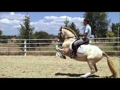 Great movie about the Portuguese lusitano horse, one of the most noble breeds in the equestrian world