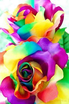 Beautiful Flowers Images, Beautiful Flowers Wallpapers, Flower Images, Beautiful Roses, Pretty Flowers, New Wallpaper Iphone, Aesthetic Iphone Wallpaper, Flower Wallpaper, Wallpaper Backgrounds