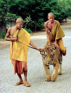 my life dream to play with a tiger