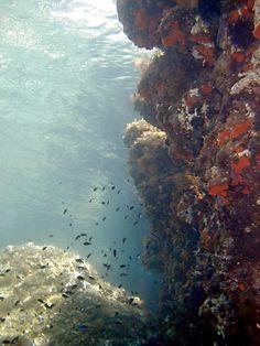 Kornati, Croatia / underwater / Adriatic sea #croatia #hrvatska