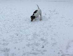 She likes snow!!!!
