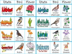 Cards: state, flower, and birds