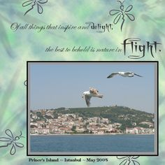 Seagulls Istanbul - Scrapbook.com My Scrapbook, Scrapbooking, Istanbul, Gulls, Island, Vacation, Layouts, Nature, Movie Posters