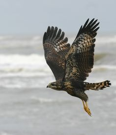 Awesome shot,it was taken for a traveler and we wanted to share it . It is a osprey!