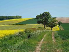 farm track on the Yorkshire Wolds