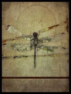 iPhoneography, 8-13-13, Dragon Fly   - Armin Mersmann