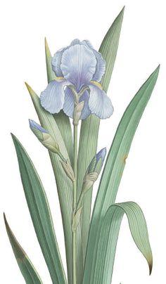 http://www.erbolario.com/linee/35-iris #iris #erbolario #viola