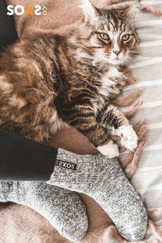 Shop the best socks and your pet will love them too! #socks #cat Woolen Socks, Rugged Look, Cold Feet, Stylish Boots, Unique Christmas Gifts, Marine Blue, Stars At Night, Cat Love, Adorable Animals