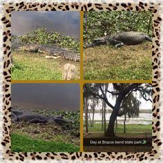 Brazos Bend State Park, Needville, Texas  Relaxing day, with a picnic and hiking the trails!  #dateday