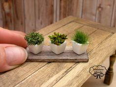Dollhouse miniature herb plants 1:12