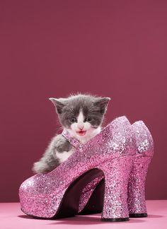 ✮ Kitten Sitting In Glitter Shoes