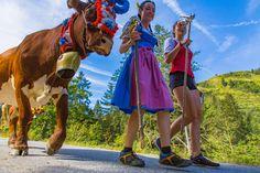 """Bald ist es wieder soweit, dann heißt's rein in das """"Dirndl"""" oder in die Lederhose und auf zum Bauernherbstfest! 🌺🌞  - Eröffnung des Bauernherbstes im Saalachtal - beim Ennsmanngut in Unken, am 27.08.2017 ab 11 Uhr  - Bauernherbstfest in Weißbach, am 02.09.2017 ab 11 Uhr  - Bauernherbstfest in Scheffsnoth/Lofer, am 03.09.2017 ab 11 Uhr  - """"Hoamfahrer""""- und Almabtriebsfest in Lofer & St. Martin, am 09.09.2017 ab 11 Uhr  Ein paar Bauernherbst & Almabtriebs Impressionen vom letzten Jahr.. 🐄… St Martin, Cow, Animals, Holiday On A Farm, Alps, Dirndl, Couple, Vacation, Animales"""