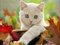 Sandy Tabby in the leaves