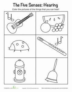 Sense of Hearing worksheet. X (log in required)
