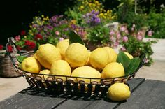 Famous citrus fruits of Guzelyurt in North Cyprus, home to many citrus groves North Cyprus, Lime, Citrus Fruits, Holiday, Paradise, Heart, Food, Cyprus, Limes