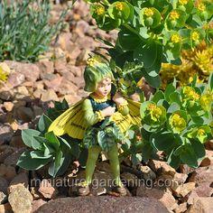 Fairy Gallery   Miniature Gardening