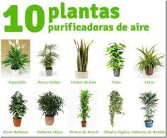 10 Plantas Purificadoras de Aire que te Conviene Tener en Casa - CUIDADOSDETUSALUD
