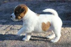 love the heart~