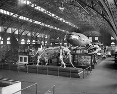 1904 WORLD'S FAIR: U.S. Government pavilion of the St. Louis World's Fair, 1904. Newfoundland Blue Whale—Exhibited at the Fair, officially the Louisiana Purchase Exposition [center, rear].