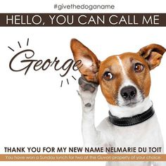 to each and very person who gave name suggestions for our He will from here on be known as Make sure you keep a for him as he will be showing you where to the specials and would love to include you in some of his Hotel Specials, Name Suggestions, Passion For Life, Real Dog, Tell The World, New Names, Real Friends, Hotel Spa, Puppy Love