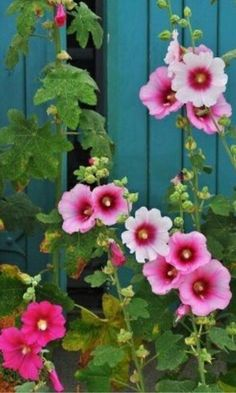 Pink flowers bring pops of cheer to any space. Learn about types of pink flowers and see pink flower images to help you find your perfect plant. My Flower, Flower Power, Pink Flowers, Beautiful Flowers, Plantation, Dream Garden, Garden Inspiration, Beautiful Gardens, Garden Plants