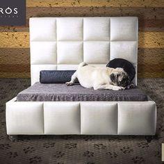 Seu PET  Merece uma caminha de LUXO KAIRÓS  I ❤ CABECEIRAS #ilovecabeceiras  ____________ Cama pet de luxo, arquitetura, cabeceiras