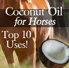 Coconut Oil for Horses - Top 10 Uses via Savvy Horsewoman http://www.savvyhorsewoman.com/2013/06/coconut-oil-for-horses-top-10-uses.html