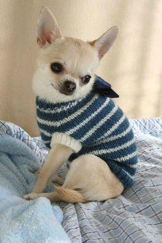Patron tricot manteau chien gratuit modeles tricot trico - Petit chien gratuit ...