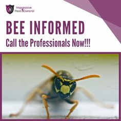 For getting our services, you can call us: +61 1800 033 756 Getting Rid Of Bees, Removal Services, Pest Control, Brisbane, Bed Bugs Treatment