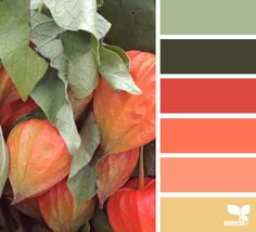 latest photo unique color palette design seeds crafts funny : Most of us discover how important color is within design. However, with plenty of the present design trends, creating interesting and cohesive color p. Colour Pallette, Color Palate, Colour Schemes, Color Combos, Color Patterns, Room Paint Colors, Paint Colors For Living Room, Design Seeds, Paleta Pantone