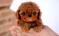 pretty cute dog - Google 検索