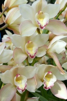 catteleyas NY Botanical Gardens 2012 Orchid Show | Piece of Cake! by Marneycakes