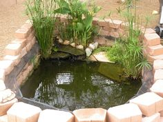 500 Gallon Turtle Pond from The Planted Tank. I like the idea of sandwiching a mesh cover between stones to prevent escape. Backyard Water Feature, Ponds Backyard, Patio Pond, Koi Ponds, Pond Landscaping, Landscaping With Rocks, Turtle Pond, Pet Turtle, Turtle Life