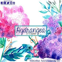 Floral elements,hydrangea, watercolor flowers, watercolour flowers, wedding invitation, greeting card, diy clip art, pink and purple, floral