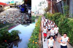 Sistema ecológico que transforma ríos contaminados en jardines flotantes - Ecocosas