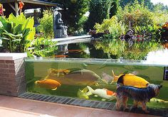 An Outdoor aquarium Is the perfect addition to the backyard. The aquarium will beautify the garden when is well placed and in harmony with the greenery. Koi Fish Pond, Fish Ponds, Koi Pond Design, Garden Design, Outdoor Fish Tank, Glass Aquarium, Aquarium Ideas, Aquarium Garden, Aquarium Design
