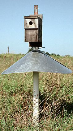 Eastern Bluebird Nest Boxes