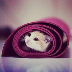 Cute cat~