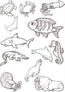 33 Melhores Imagens De Animais Marinhos Animais Colorir E