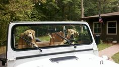 dogs can't drive...