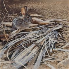 Desert Cottontail - Our Bunny of the Sacred Palms by Andrew Denman