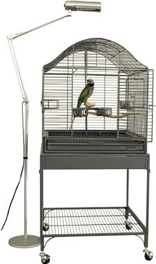 Preventing the Winter Blues in Your Pet Bird - Bird Pet Care Corner - PetSolutions