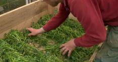 Gör som Mandelmanns – odla i sand och gräsklipp! Greenhouse Gardening, Gardening Tips, Growing Vegetables, Dream Garden, Amazing Gardens, Vegetable Garden, Outdoor Gardens, Herbs, Flowers
