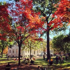 Harvard Yard in Cambridge, MA by @melinadeboston on Instagram