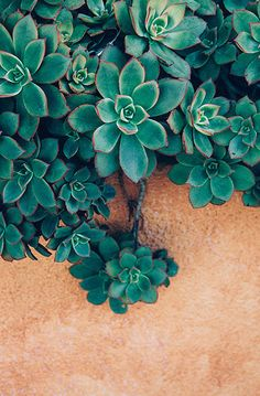 Lovely Clusters - Online Curator : Photography Download, Succulent Photography, Bohemian Decor