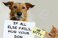 Hugs please.... cat, anim, dogs, pet, puppi, kitty, quot, true stories, friend