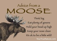 Each postcard says: Advice from a Chickadee Sing a cheerful tune Be full of life Learn to adapt Spend time in the woods Get along with everyone Make a cozy nest Animal Meanings, Animal Symbolism, Nose Cleaner, Think Big, True Nature, How To Get Money, Good Advice, Spirit Animal, Moose